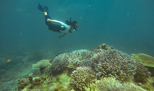 Diving in Phuket Where to Go and What to Experience