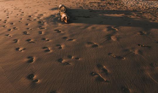 Walk-Carbon-Footprint